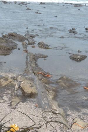 Petrified fallen tree