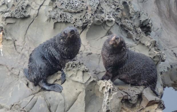 Seals everywhere north of Kaikoura.