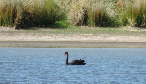 but there are some nice swans in the lake.