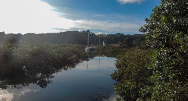 Mangrove like environment at the outskirts of Whangateeau