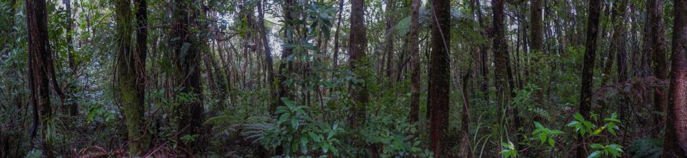 Panorama0123copy