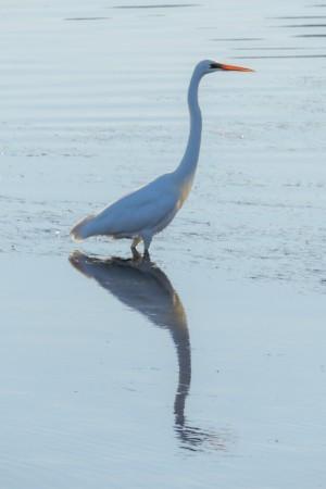 With nice white bird